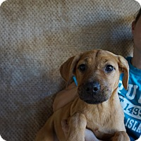 Adopt A Pet :: Juliet - Oviedo, FL