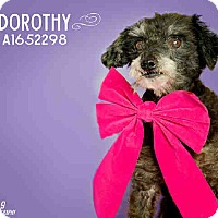 Adopt A Pet :: Dorothy - Creston, CA