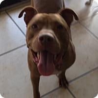 Adopt A Pet :: Ned - Irmo, SC