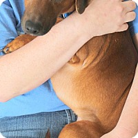 Adopt A Pet :: James Dean - Mocksville, NC
