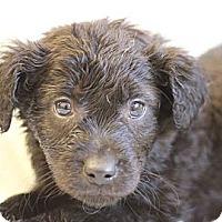 Adopt A Pet :: Fortune - Roosevelt, UT