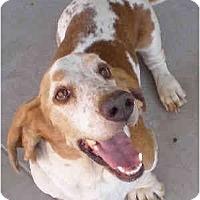 Adopt A Pet :: Davis - Phoenix, AZ