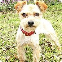 Adopt A Pet :: Doogan - Mocksville, NC