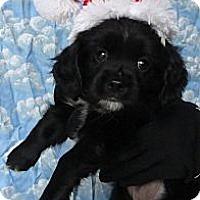 Adopt A Pet :: Koby - Sugarland, TX