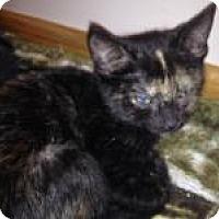 Adopt A Pet :: Paprika - East Hanover, NJ