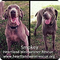 Adopt A Pet :: Senior Smokey - Wichita, KS