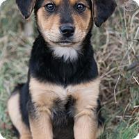 Adopt A Pet :: *Justine - PENDING - Westport, CT