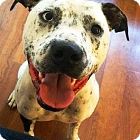Adopt A Pet :: Frankie - Castro Valley, CA