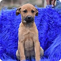 Adopt A Pet :: Lodi - Groton, MA