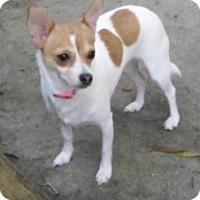 Adopt A Pet :: Juby - Umatilla, FL