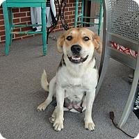 Adopt A Pet :: Molly - Huntsville, AL