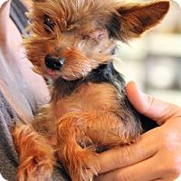 Adopt A Pet :: Waffle - Ft. Lauderdale, FL