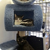 Adopt A Pet :: Sasha and Georgie - Novato, CA