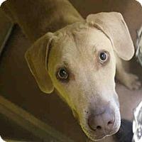 Adopt A Pet :: MARLEY - Norman, OK