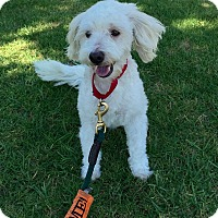 Adopt A Pet :: Puddles - Mission Viejo, CA