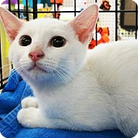 Adopt A Pet :: Sammy - Castro Valley, CA