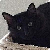 Adopt A Pet :: Dori - Tiburon, CA