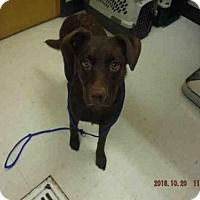 Adopt A Pet :: JADE - Oroville, CA