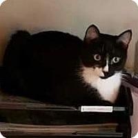 Adopt A Pet :: Minnie - Horsham, PA
