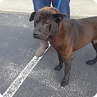 Adopt A Pet :: Digger - Richfield, WI