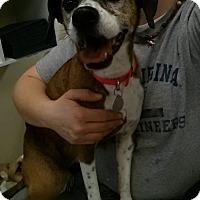 Adopt A Pet :: Serendipity - Shinnston, WV