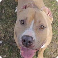 Adopt A Pet :: SUNDANCE - Decatur, IL