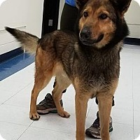Adopt A Pet :: Jasper - Beacon, NY