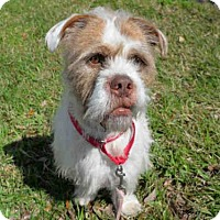 Adopt A Pet :: BOOMER - West Palm Beach, FL