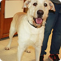 Adopt A Pet :: Lupin - Cottageville, WV