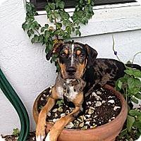 Adopt A Pet :: Dawson - Hubertus, WI