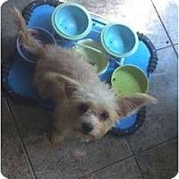 Adopt A Pet :: JUSTINE - Houston, TX