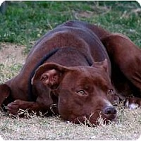 Adopt A Pet :: RED RUBY - Phoenix, AZ