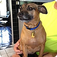 Adopt A Pet :: Gracie - Malaga, NJ