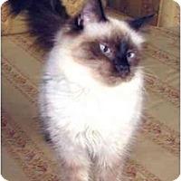 Adopt A Pet :: Marina - Davis, CA