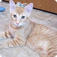 Adopt A Pet :: Peeta - Grand Chain, IL