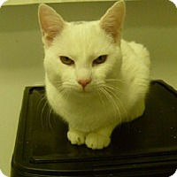 Adopt A Pet :: Smudge - Hamburg, NY