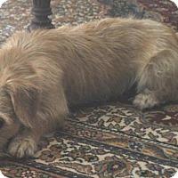 Adopt A Pet :: Roger - Phoenix, AZ