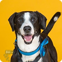 Adopt A Pet :: Blade - Northbrook, IL