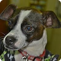 Adopt A Pet :: Rosie - Meridian, ID
