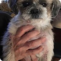Adopt A Pet :: Louie - E. Greenwhich, RI