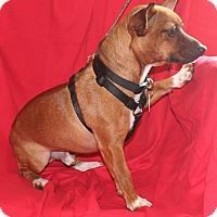 Adopt A Pet :: Jake - Umatilla, FL