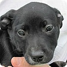 Adopt A Pet :: Bristol