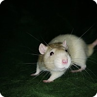 Adopt A Pet :: Liam - Welland, ON