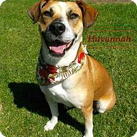 Adopt A Pet :: Havannah - El Cajon, CA