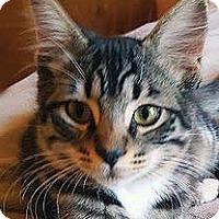 Adopt A Pet :: Zack - Tiburon, CA