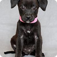 Adopt A Pet :: Emma - Waldorf, MD
