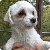 Adopt A Pet :: Charmin - Crump, TN