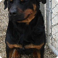 Adopt A Pet :: Diesel - Clear Lake, IA