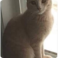 Adopt A Pet :: Reggie - THORNHILL, ON