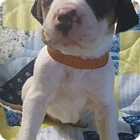 Adopt A Pet :: Ember - Trenton, NJ